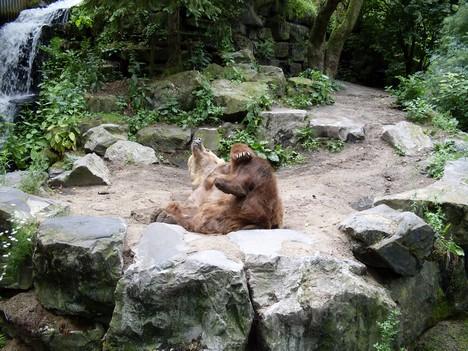 Ongebruikt Geluiden van beren | GEOlution UC-56