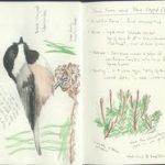 Jim Conrad's 3 stappenplan om de natuur te leren kennen