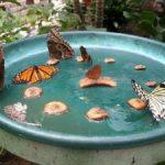 Vlinder diner